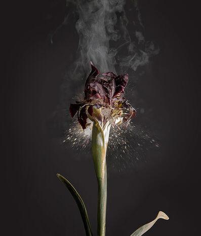 Ori Gersht, 'Fragile Land - Iris Atropurpurea D01', 2018
