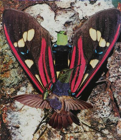 Jean Conner, 'HUMMINGBIRDS', 1980