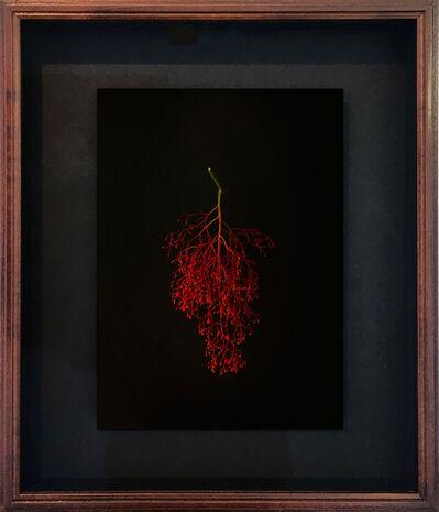 Angelika Sher, 'Untitled', 2017