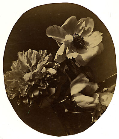 Adolphe Braun, 'Flower Study', ca. 1855