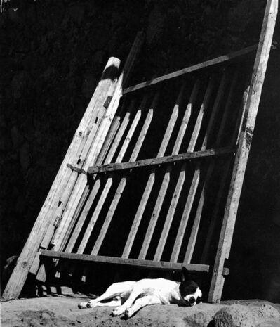 Manuel Álvarez Bravo, 'Los suenos nan de creese', 1966
