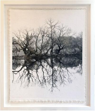 Bill Claps, 'Tree at Nanzenji Temple', 2019