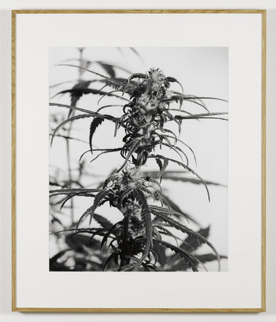 Joachim Koester, 'From the Secret Garden of Sleep 05', 2008