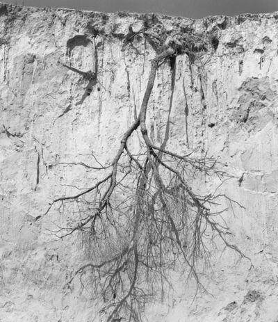 付 羽, '倒挂的树 Upside Down Tree', 2016
