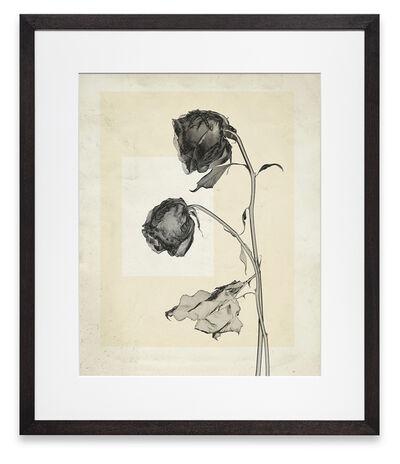 Thomas Ruff, 'flower.s.06', 2018