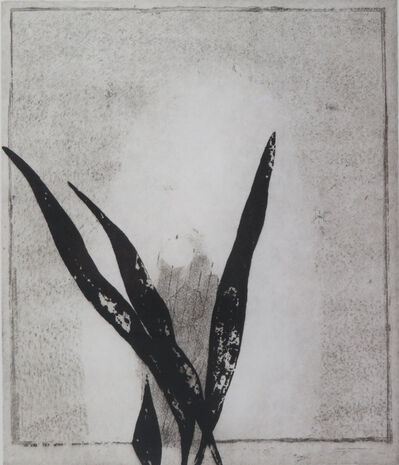 Prunella Clough, 'Mirror and Plant', 1996