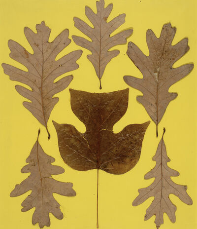 Josef Albers, 'Leaf Study IX', ca. 1940