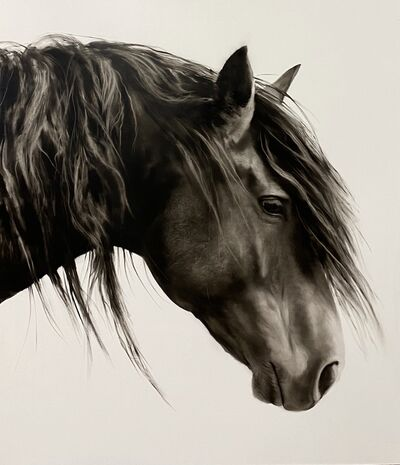 "Kenneth Peloke, '""Drifter"" photorealistic oil painting of a dark horse in profile with white background', 2020"