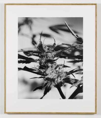 Joachim Koester, 'From the Secret Garden of Sleep 01', 2008