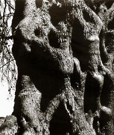 Aaron Siskind, 'Olive Tree, Corfu 119', 1970 / 1972