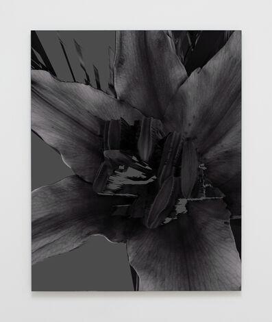 Amy Yao, 'Sometimes You Forget My Name (Lily Stargazer)', 2016