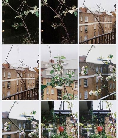 Wolfgang Tillmans, 'Process (Apple Tree)', 2012