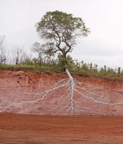 Pedro Motta, 'Sem título – Série: Natureza das Coisas', 2013