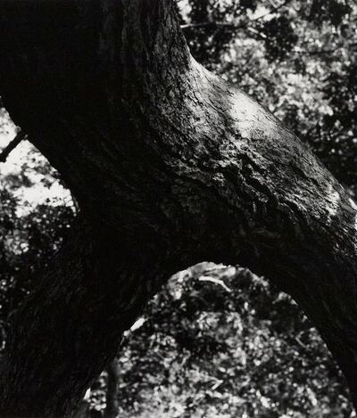 Aaron Siskind, 'The Tree 108', 1972