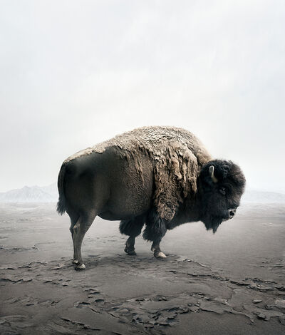 Alice Zilberberg, 'Be Here Bison', 2019
