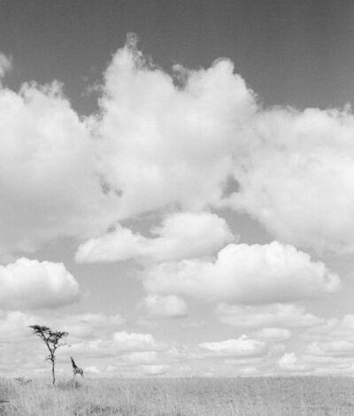 Hector Acebes, 'Landscape Tanzania', 1953