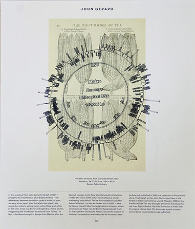 Pedro Neves Marques, 'Maize (Leonhart Fuchs: 1543) + Maize Chloroplast DNA', 2017