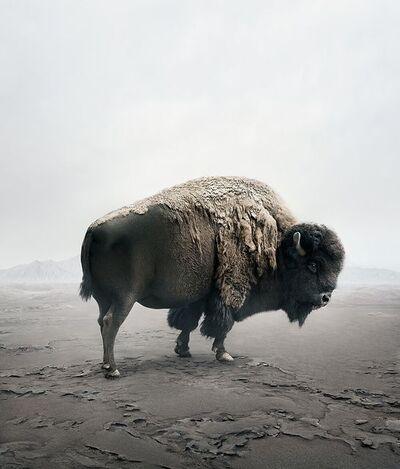 Alice Zilberberg, 'Be Here Bison ', 2019