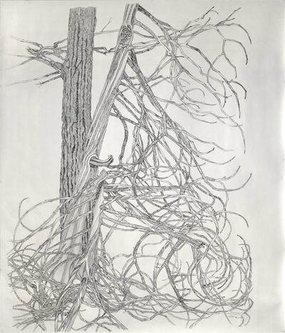 Ray Cicin, 'Cedar Bones'