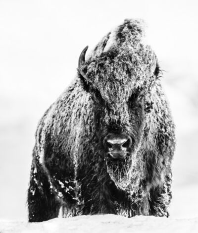 David Yarrow, 'The Beast'