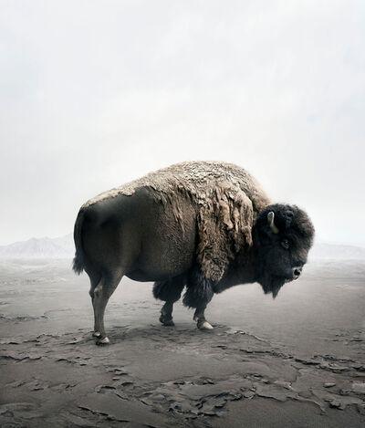 Alice Zilberberg, 'Be Here Bison', 2019