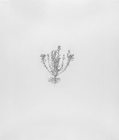 Michael Landy, 'Pineapple Weed', 2003