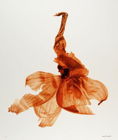 Denis Brihat, 'Pelure d'oignon (Onion skin)', 2006