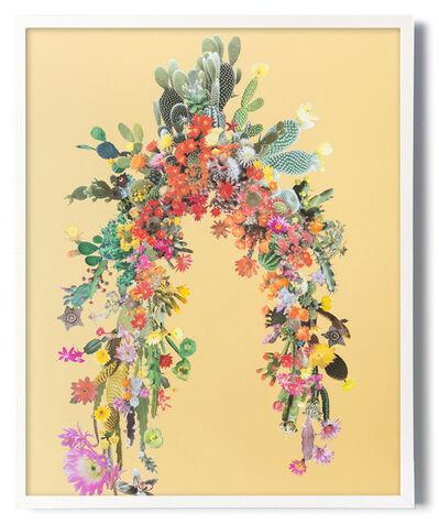 Stephen Eichhorn, 'Arc (Cacti & Succulents)', 2017
