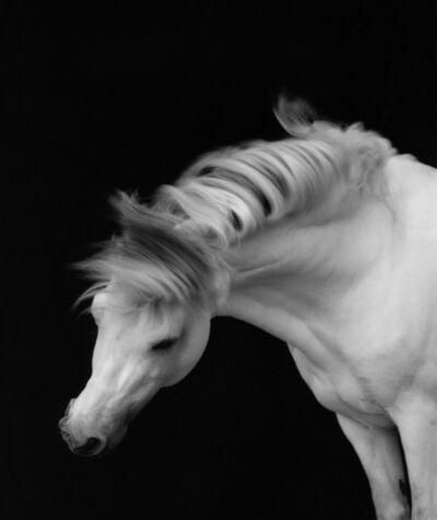 Sheila Rock, 'Horse #1', ca. 1999