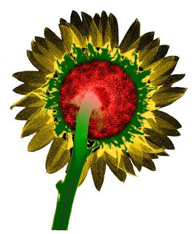 Taesub Chung, 'Sunflower', 2008