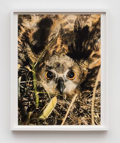 Juergen Teller, 'Owl, Hydra', 2017
