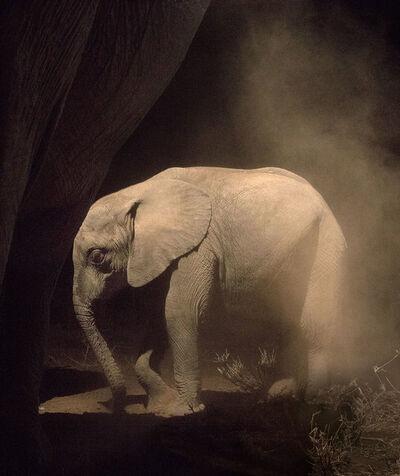 Nick Brandt, 'Elephant Baby Statue', 2018