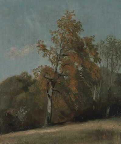 John Constable, 'Study of an Ash Tree', between 1801 and 1803 or between 1810 and 1830