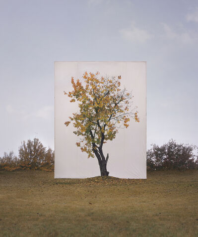 Lee Myoung Ho, 'Tree #8', 2007