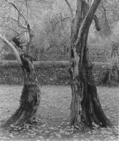 Ellen Auerbach, 'Dancing Trees, Mallorca', 1959