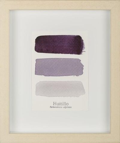 Susana Mejía, 'Serie Huitillo III', 2015