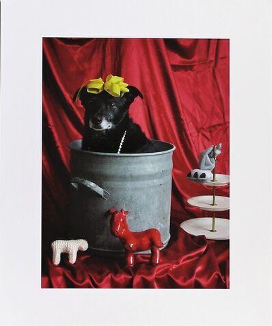Thorsten Brinkmann, 'La Belle dü Topf - Ernie, Portraits of a Studiodog', 2011