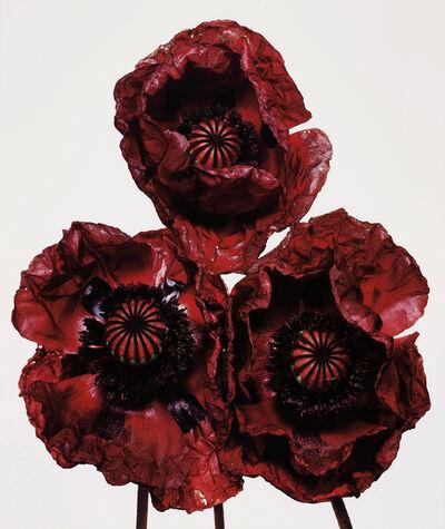 Irving Penn, 'Three Poppies, Arab Chief, New York', 1969-printed 1992