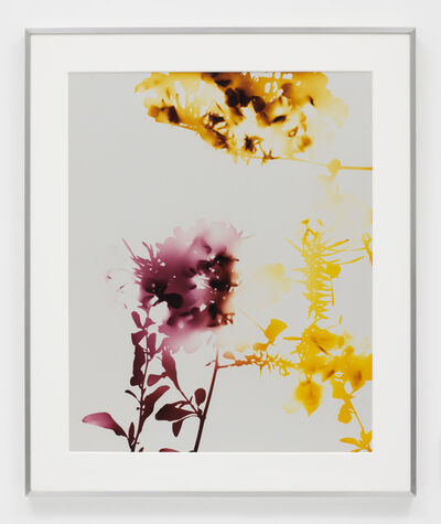 James Welling, '#008', 2005