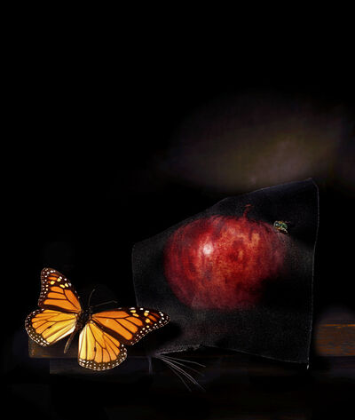 CJ Taylor, 'Still life with apple and green fly,', 2014