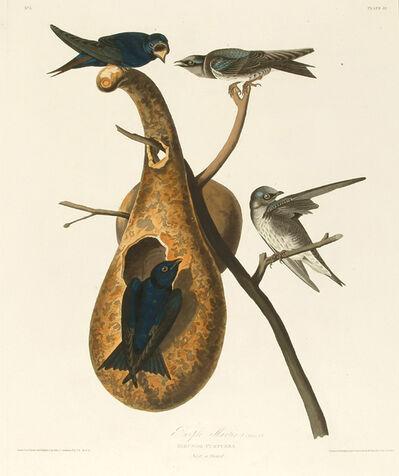 John James Audubon, 'Purple Martin', 1827