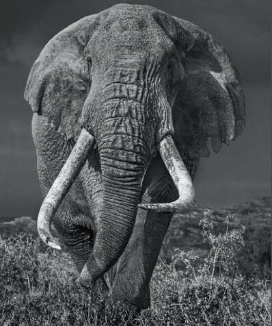 David Yarrow, 'Bunga Bunga', 2017