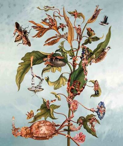 Dominique Paul, 'Insects of Suriname 19', 2013