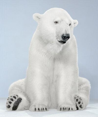 Jill Greenberg, '21-9 (Agee Polar Bear 8_10 Vancouver)'
