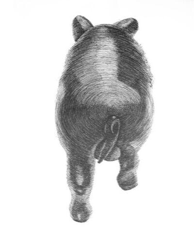 Douglas Rodrigo Rada, 'Cerdo Espiral (lomo)', 2014