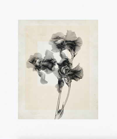 Thomas Ruff, 'flower.s_10', 2020