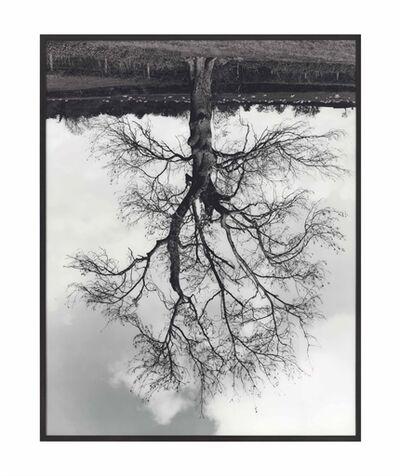 Rodney Graham, 'Welsh Oaks (#4)'