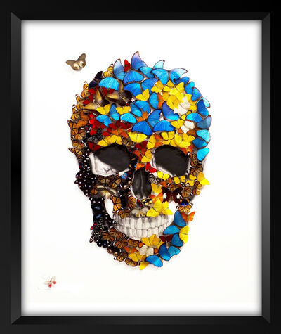 SN, 'Butterfly Skull', 2017