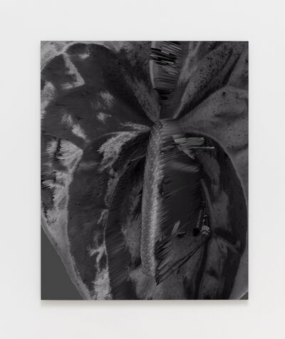 Amy Yao, 'Sometimes You Forget My Name (Anthurium Andraeanum)', 2016