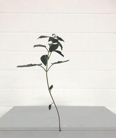 Tony Matelli, 'Weed', 2006